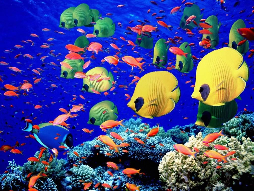 الاحتباس الحراري يقلص حجم الأسماك
