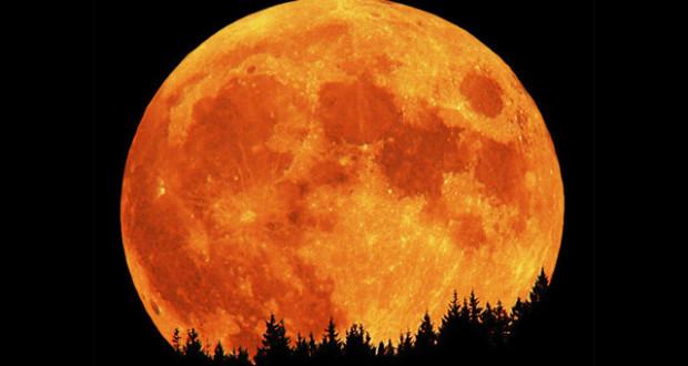 """""""ناسا"""" تنوي زراعة الريحان واللفت على القمر"""