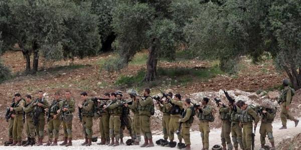 komondos - israel