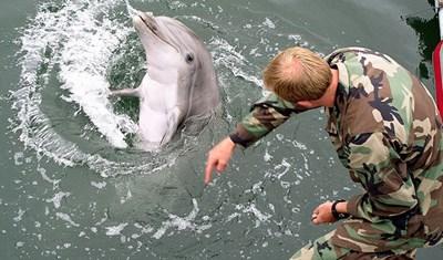 russia - delphin