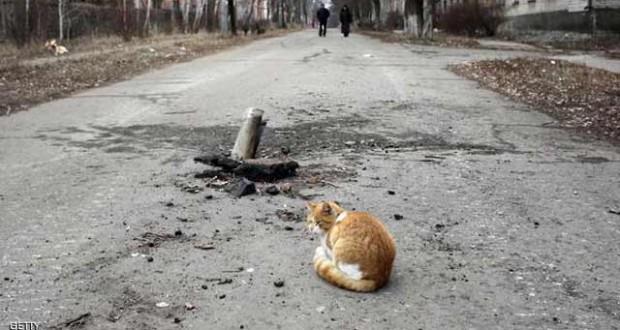فضلات قطة تتسبب بتسرب إشعاعي