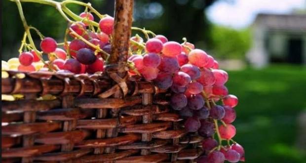 العنب الأحمر يكافح الزهايمر والسرطان