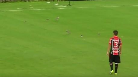 سرب من الطيور يقتحم مباراة لكرة القدم في البرازيل .. (فيديو)