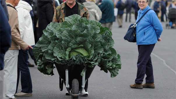 فواكه وخضروات عملاقة