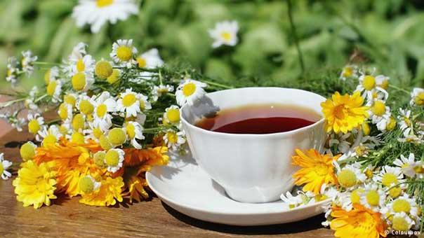 شاي الأعشاب