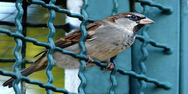 bird-984559_1920.jpg