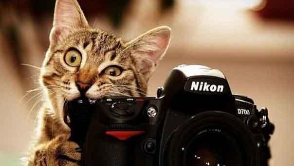 أحدث الفتاوى الوهابية: الصور مع القطط حرام
