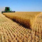 إيران تستغني عن إستيراد القمح