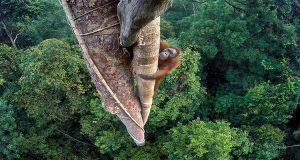 اجمل الصور الفائزة بمسابقة 'مصور الحياة البرية 2016'