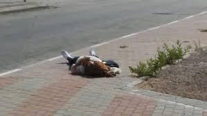 nablus-martyr-girl