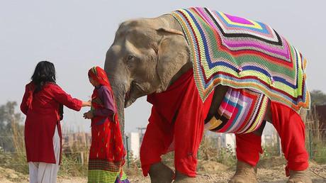 وفاة أكبر الفيلة عمرا في الهند