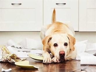 لهذه الأسباب ..الكلاب قد تخدع البشر