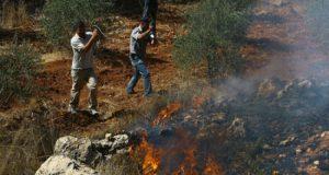 مستوطنون يحرقون أشجار زيتون جنوب نابلس